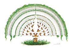Beställa handmålade släktträd