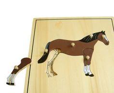 puzzle koń szkielet Montessori