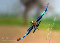Nature by tariqsulemani1 #animals #animal #pet #pets #animales #animallovers #photooftheday #amazing #picoftheday