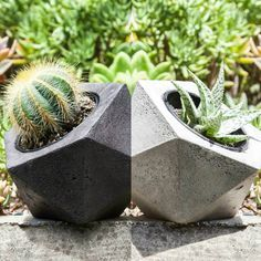 And then there was more introducing another two awesome plantpot combos available for sale on www.manplants.com.au (link in bio)  www.manplants.com.au