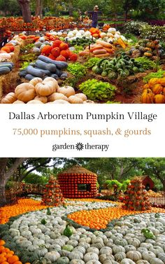 Dallas Arboretum Pumpkin Village Tour the fall festival at the Dallas Arboretum that hosts the Pumpkin Village, a small town created with pumpkins, gourds and, squash The Great Pumpkin Patch, Road Trip Hacks, Road Trips, Dallas Arboretum, Autumn Scenes, Fall Pictures, Holiday Time, Happy Fall, Garden Planning