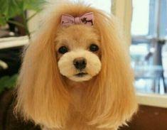 Dog-pink-bow.jpg (640×498)