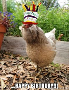 ....Happy Birthday!!! - Party hat chicken