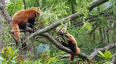 Zoo Ostrava - Ostrava, Czech Republic Czech Republic, Trip Advisor, Animals, Animaux, Animal, Animales, Animais