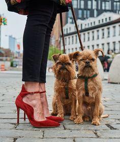 I migliori modelli per pubblicizzare le scarpe? Sono questi adorabili cani -cosmopolitan.it