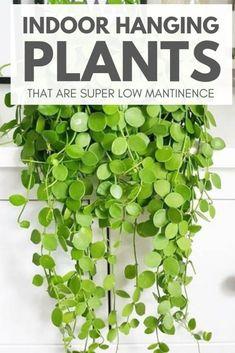 Best Indoor Hanging Plants, Outdoor Plants, Garden Plants, Garden Beds, Indoor Plant Decor, Easy Care Indoor Plants, Small Indoor Plants, Indoor Flowering Plants, Indoor Herbs
