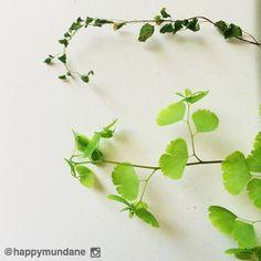#fern photo by happymundane on Instagram