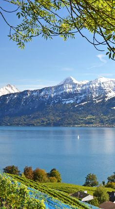 Am Thunersee fischen, die wunderbare Aussicht genießen und dabei ein Glas des lokalen Weins verköstigen. Spiez im Schweizer Kanton Bern ist der ideale Ort um zu entspannen. #verschweizert