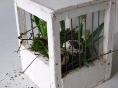 bird's nest in a bird cage https://s-media-cache-ak0.pinimg.com/originals/41/98/ed/4198edee45a4a4bf75e6485d43219ee2.jpg