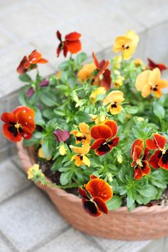 the flowers compliment this terracotta bowl