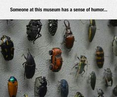 Bug museum display--with a twist.