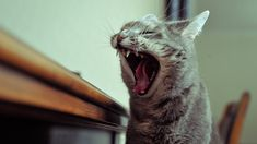 How To Stop Your Cat From Biting ... Cat biting is a common problem among cats that should be stopped if it occurs. Cat bites have the potential to cause health problems. If your cat is biting, here are some methods to get him to stop. ... #petcaretips #pets #animals ... PetsLady.com