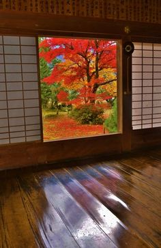 Autumn view at Kosho-ji temple, Kyoto, Japan by lilly