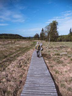 Promenade dans les tourbières du parc naturel des Hautes Fagnes Eifel Monuments, Railroad Tracks, Holland, Germany, Country Roads, Mountains, Natural Park, Brussels, Places