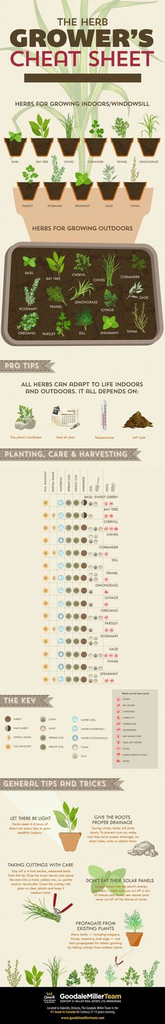 If you're like many people this time of year, you are enjoying the gorgeous May weather and starting your summer gardening. For our latest infographic we've given you a cheat sheet on how to grow all kind of delicious herbs either indoors or outside. From Basil to Thyme we've got you covered! #infographic