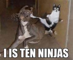 ninja cat funny lolcat lol