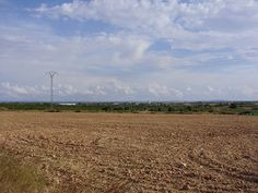 Nature (On August 29, 2013), Villarrobledo (Albecete, Spain). Naturaleza (29 de Agosto, 2013), Villarrobledo (Albecete, España).