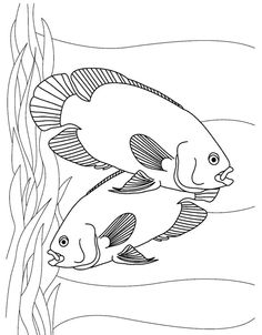 aquarium fish oscars printable kids coloring sheet httpwwwkidscpcomaquarium fish oscars printable kids coloring sheet pinterest