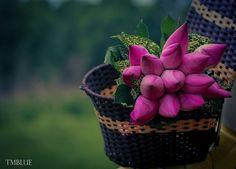 Basket of flowers Flower Basket, My Flower, Flower Power, Lotus Flower, Beautiful Flower Arrangements, Floral Arrangements, Beautiful Flowers, Beautiful Life, Purple Tulips