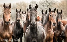 What a beautiful grouping of horses.
