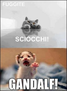 Il signore degli anelli visto dai gatti #funny