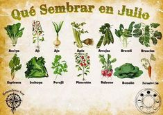 Common Garden Pests to Watch For Eco Garden, Garden Deco, Garden Pests, Edible Garden, Growing Plants, Growing Vegetables, Organic Gardening, Gardening Tips, Gardening Quotes