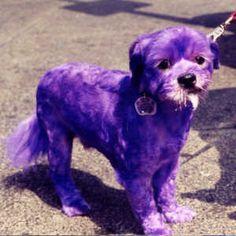purple puppy!!