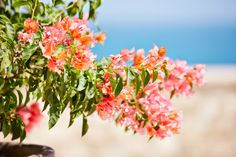 Experience the beautiful scenery at #EsperanzaResort!