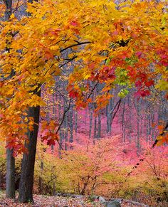 ✯ Pink Forest wow I how never experienced mother nature in such Devine mode