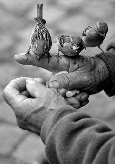 feeding the birds / Hand Gestures Speak