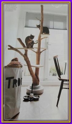 Diy Cat Tree, Cat Playground, Playground Design, Cat Towers, Gatos Cats, Cat Shelves, Cat Room, Pet Furniture, Furniture Stores