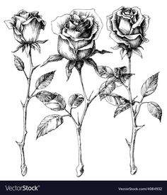 Single roses drawing set. Download a Free Preview or High Quality Adobe Illustrator Ai, EPS, PDF and High Resolution JPEG versions. ID #4084932.