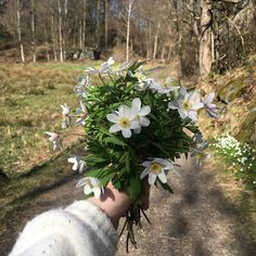 Junes Dagbok: SUNDAYS! About Me Blog, Sunday, Domingo