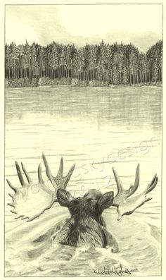 Out for a Swim Moose Digital print from original pencil drawing. by Rebekah Hughes