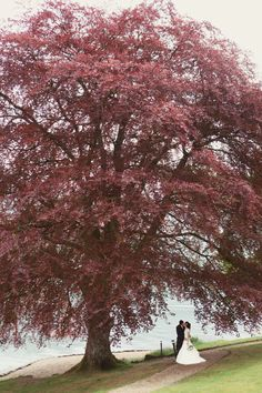 big, fuchsia tree