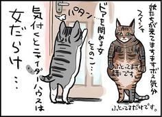ニャイダーハウスの猫マンガ。。。