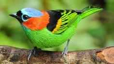 120 aves inusuales y de colores vibrantes @alvarodabril | Dineroclub Magazine sobre Marketing
