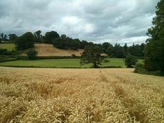 jrobsonphotography:  Camera phone snap- crop fields.