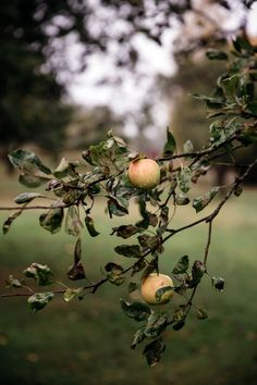 http://www.cannellevanille.com/gluten-free/autumn-in-sweden/