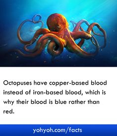 Octopuses Have Copper-based Blood Instead Of Iron-based Blood, Which Is Why Their Blood Is Blue Rather Than Red - Interesting Facts