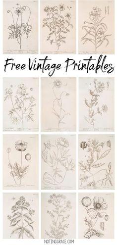 Free Vintage Printable Artwork | Noting ...