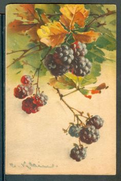 ART-CATHERINE-KLEIN-BLACKBERRIES-NICE-POSTCARD Catherine Klein, Botanical Art, Botanical Illustration, Watercolor Illustration, Fruit Painting, China Painting, Watercolor Flowers, Watercolor Paintings, Painted Books