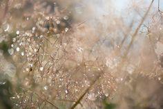 mlodzikova-magic-plant-3.jpg (800×534)