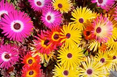 StompBeast: Trippin' thru the e-daisies