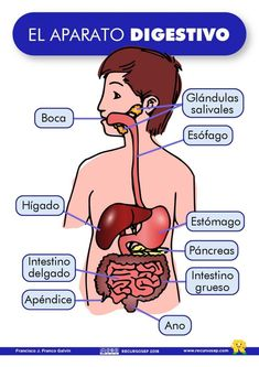 Recently shared sistema digestivo ideas & sistema digestivo pictures Spanish Lessons, Learning Spanish, Math Lessons, Med Student, Student Studying, Human Body Systems, Medical Anatomy, Halloween Activities For Kids, Muscle Anatomy