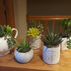 New Spring Succulent Collection.