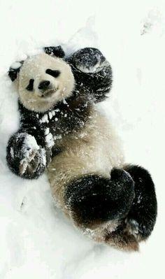 Happy Winter Panda #christmas
