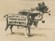 Antique Boardwalk Cigar Advertising American Pitbull Banner Pipe Hat Old Photo American Pitbull, Weird Vintage, Vintage Dog, Vintage Medical, Vintage Photographs, Vintage Photos, Boston Terrier Love, Boston Terriers, Cairn Terriers