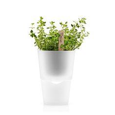 Eva Solo frosted glass self-watering herb pot - Yuppiechef registry Garden Planters, Indoor Garden, Indoor Plants, Planter Pots, Indoor Herbs, Self Watering Pots, Metal Planter Boxes, Fiberglass Planters, Herb Pots