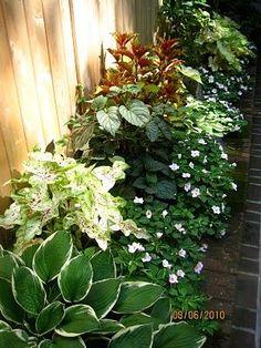 Shade plants along fence/ along perimeter of yard.